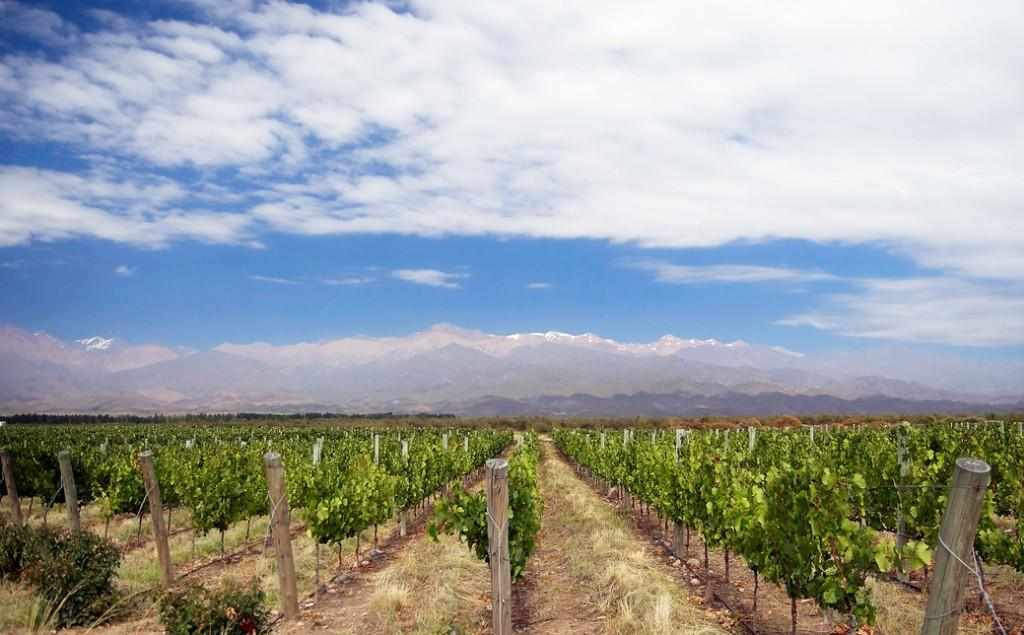 Vineyard_in_Mendoza_Argentina-1-1